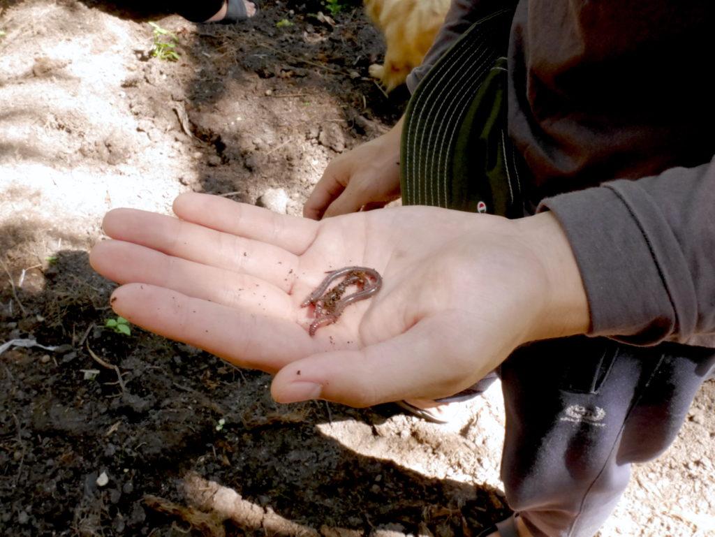 Young Folk Going Back to Root – Fiew & Fight Organic Farm การกลับบ้านของ 2 หนุ่มเมืองกรุงมาปลูกผักอินทรีย์ ในพื้นที่ที่ 'เป็นไปไม่ได้'