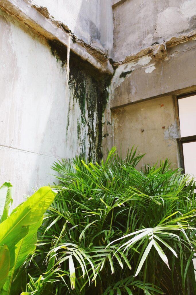 นิทรรศการ The Terrarium : Redressing the Im / balance จดหมายรักถึงต้นไม้ก่อนวันที่ต้นไม้หายไป