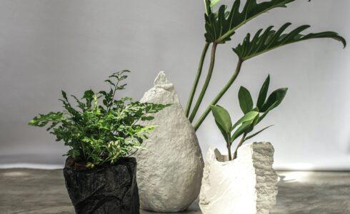 REGIS PLANTOPIA (รีจิส แพลนโทเปีย) กระถางต้นไม้และแจกันที่ทำให้เราเชื่อมต่อกับธรรมชาติได้ทุกวัน